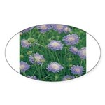 Scabiosa Blue Oval Sticker