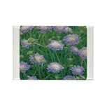 Scabiosa Blue Rectangle Magnet