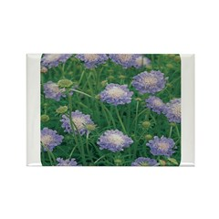 Scabiosa Blue Rectangle Magnet (100 pack)