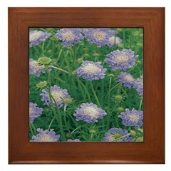 Scabiosa Blue Framed Tile