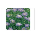Scabiosa Blue Postcards (Package of 8)