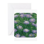 Scabiosa Blue Greeting Cards (Pk of 10)