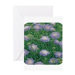 Scabiosa Blue Greeting Card