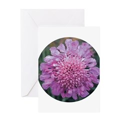 Scabiosa Pink Greeting Card