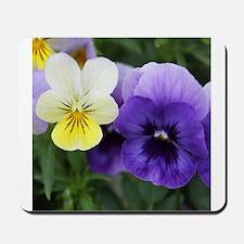 Italian Purple and Yellow Pansy Flowers Mousepad