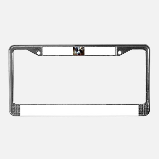 Party boy License Plate Frame