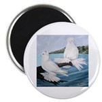 White Trumpeter Pigeons Magnet