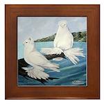 White Trumpeter Pigeons Framed Tile
