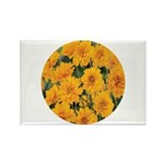 Coreopsis Early Sunrise Rectangle Magnet (10 pack)