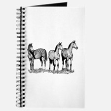 Arabian Horses Journal