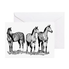 Arabian Horses Greeting Cards (Pk of 10)