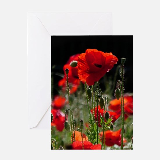 Red Poppies in bright sunlight Greeting Cards