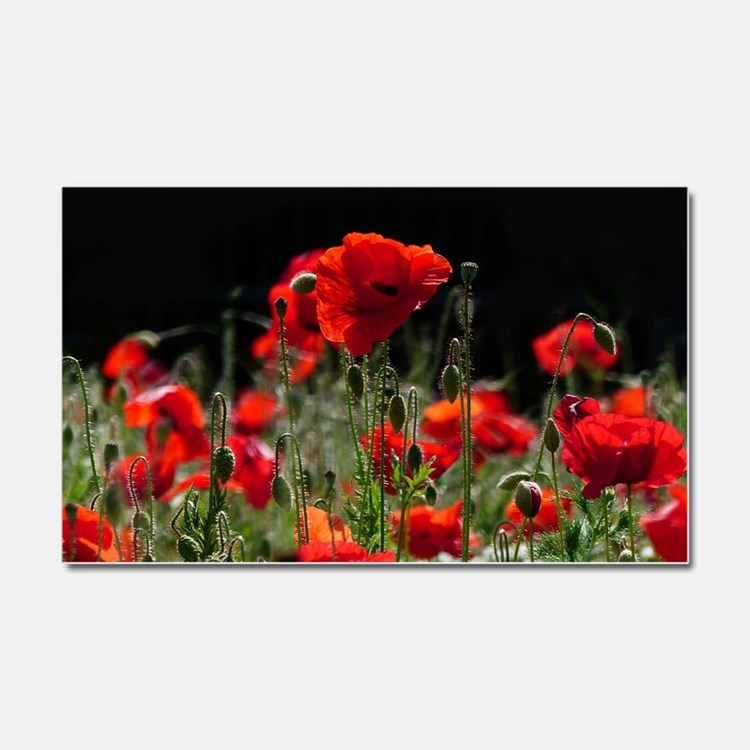 Red Poppies in bright sunlight Car Magnet 20 x 12
