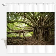 Massive Banyan Tree in Maui Shower Curtain