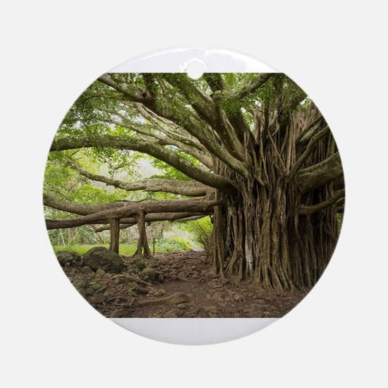 Massive Banyan Tree in Maui Round Ornament