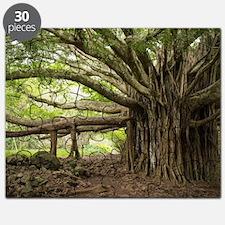 Massive Banyan Tree in Maui Puzzle