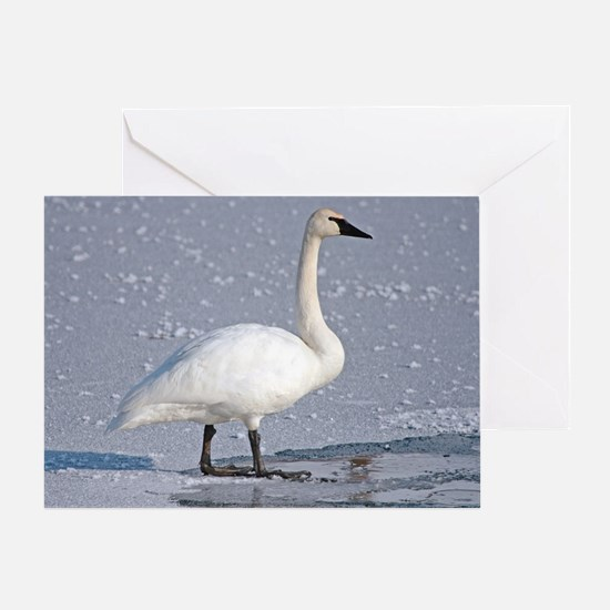 Funny Swans Greeting Card