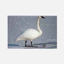 Cute Geese Rectangle Magnet
