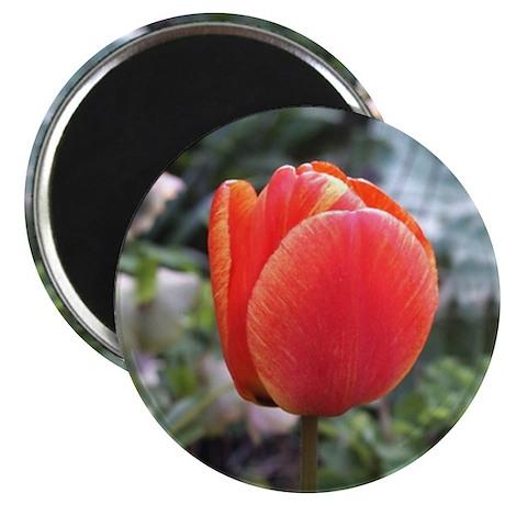 """2.25"""" Tulip Magnet (10 pack)"""