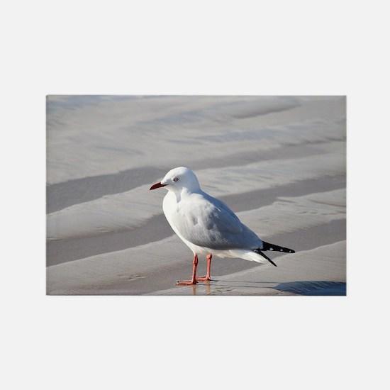 Unique Seagull photos Rectangle Magnet