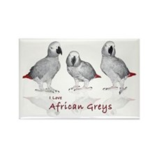 african grey parrots Rectangle Magnet