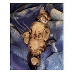 Sleeping Kitten Small Poster