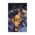 Sleeping Kitten Mini Poster Print