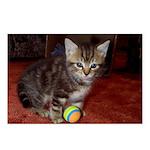 Tabby Kitten Postcards (Package of 8)