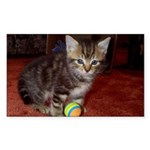 Tabby Kitten Rectangle Sticker
