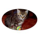 Tabby Kitten Oval Sticker