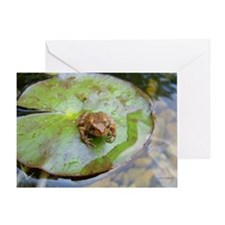 Toad on Lilypad Greeting Card
