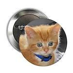 Ginger Kitten Button