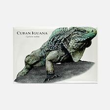 Cuban Iguana Rectangle Magnet