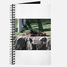 Orangutan lying down Journal