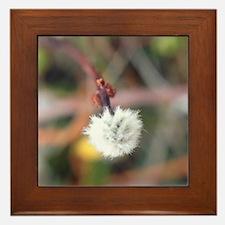 dandelion Macro Framed Tile
