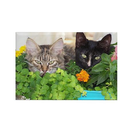 Kittens in Flower Pot Rectangle Magnet (10 pack)