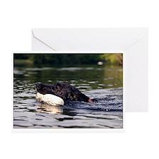 Swimming Lab Greeting Cards