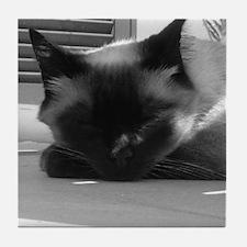 Tonkinese Cat B&W Tile Coaster