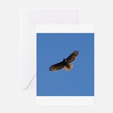 Red-Tailed Hawk Greeting Cards (Pk of 20)