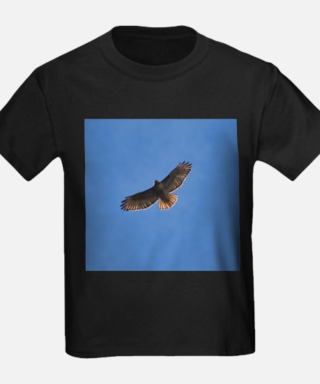 Red-Tailed Hawk T