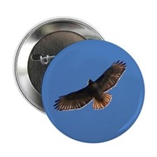 "Red-Tailed Hawk 2.25"" Button"