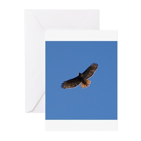 Red-Tailed Hawk Greeting Cards (Pk of 10)