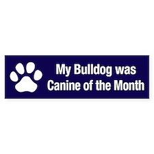 Bulldog of the Month Bumper Bumper Sticker