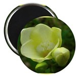 New Bloom Magnet