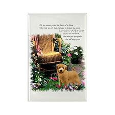 Norfolk Terrier Art Rectangle Magnet (100 pack)