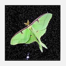 Luna Moth Tile Coaster