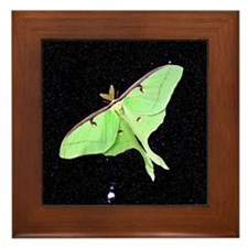 Luna Moth Framed Tile