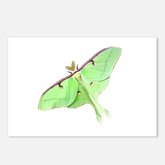 Luna Moth Postcards (Package of 8)