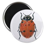 Ladybug 2.25