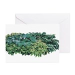 Hosta Clumps Greeting Cards (Pk of 20)
